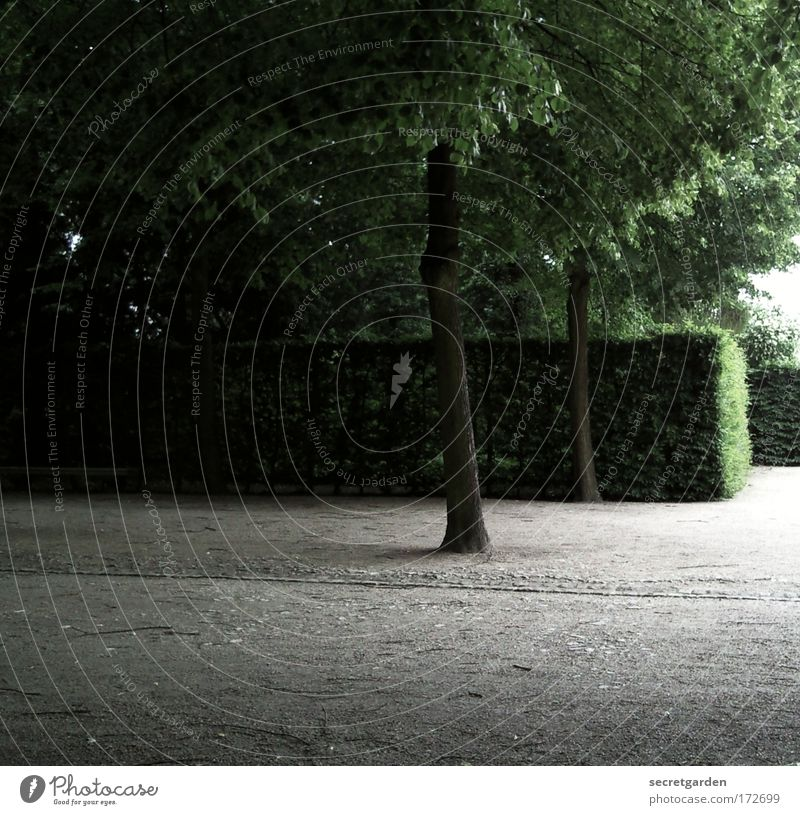 leave me alone Natur grün Baum Sommer Einsamkeit ruhig Erholung Umwelt dunkel Holz Garten Traurigkeit Park Stimmung Zufriedenheit Ordnung