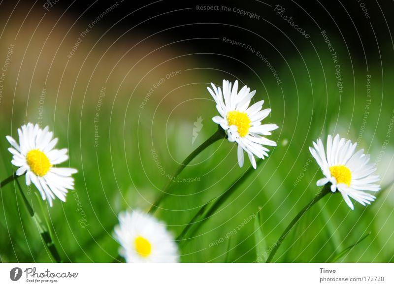 Melancholie Farbfoto mehrfarbig Außenaufnahme Nahaufnahme Menschenleer Textfreiraum oben Tag Pflanze Frühling Sommer Blume Blüte Wiese gelb grün Traurigkeit