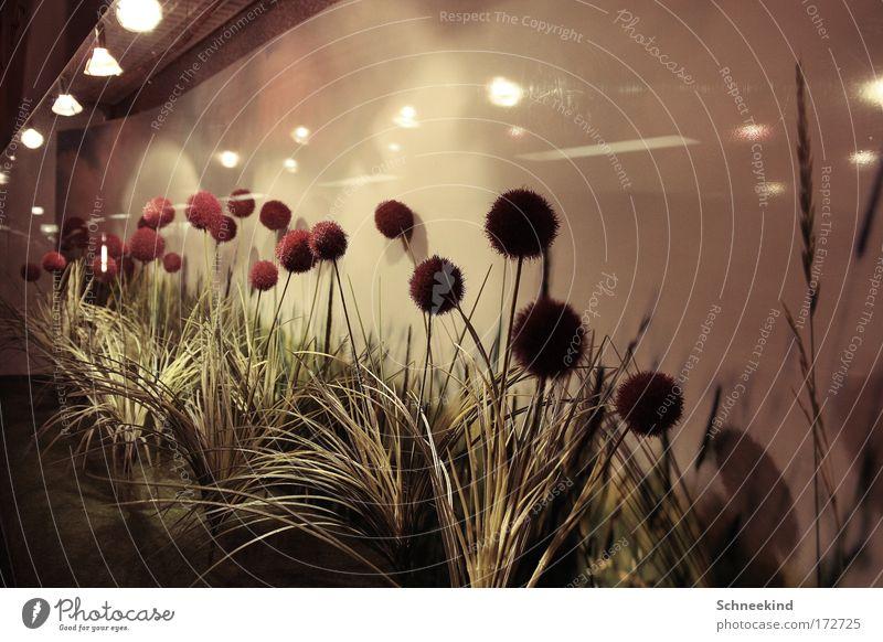 Feldblumen äää oder so ähnlich schön Pflanze Wand Blüte Garten Mauer Design Umwelt modern ästhetisch Kitsch beobachten Idylle Innenarchitektur Blühend entdecken