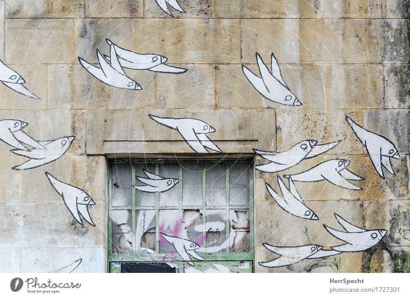 Geschwader Kunst Kunstwerk Stadt Bauwerk Mauer Wand Fenster Stein Glas Metall Graffiti elegant trashig braun weiß Vogel Vogelflug Vogelschwarm Natursteinfassade