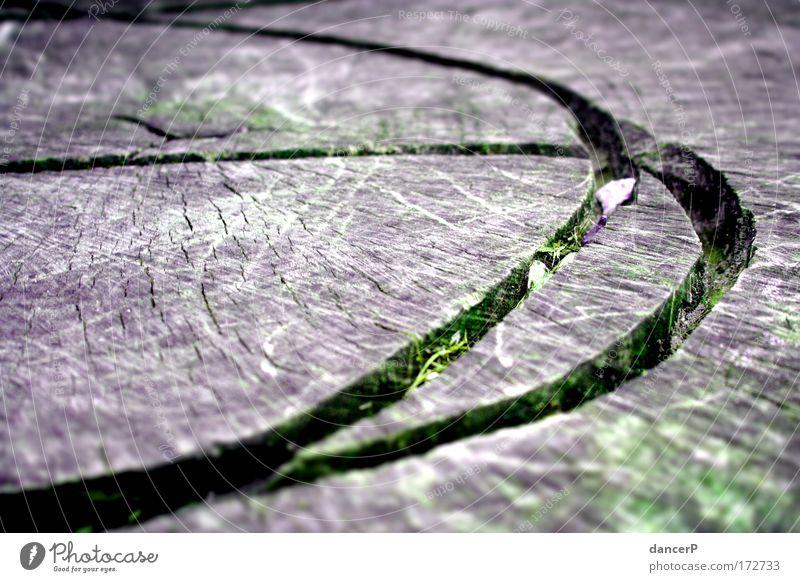 The Green Mile Natur Ferien & Urlaub & Reisen Baum Pflanze Umwelt Graffiti Berge u. Gebirge Holz Stil Park Design Ausflug Schriftzeichen Zukunft Zeichen Urwald