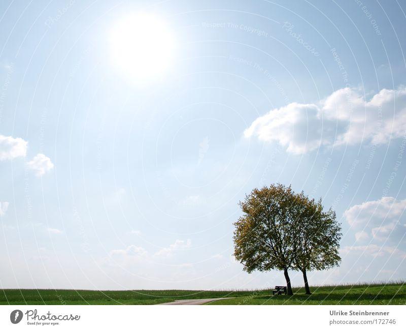 Zugeneigt Natur Himmel Baum Sonne grün blau Wolken Frühling Glück Wege & Pfade Landschaft Luft Zusammensein Feld Wachstum stehen