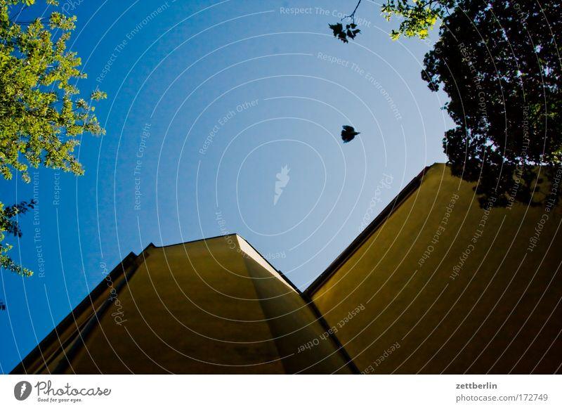 Hinterhof mit Taube Hinterhalt hinten Stadthaus Haus Gebäude Mauer Brandmauer Mieter Vermieter Himmel Sommer grün Baum Blatt Pflanze Sauerstoff Schatten