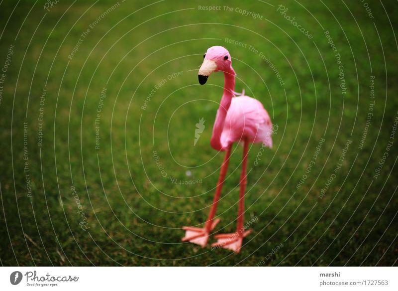 Penelope II Garten Park Wiese Tier 1 Gefühle Stimmung grün rosa Flamingo Dekoration & Verzierung lustig Vignettierung klein süß Tierschutz Zoo Außenaufnahme