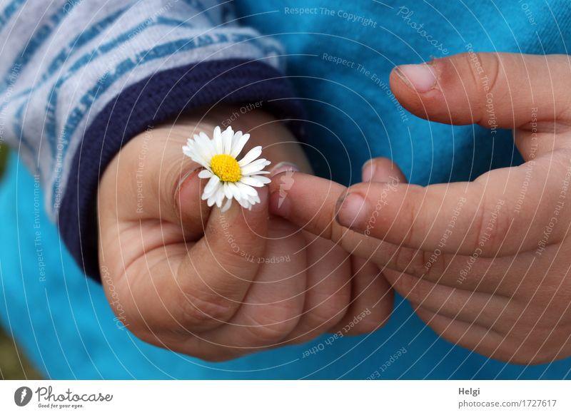 für Mama... Mensch Kleinkind Hand Finger 1 1-3 Jahre Pflanze Blume Gänseblümchen T-Shirt Blühend festhalten authentisch dreckig einfach frisch schön klein blau