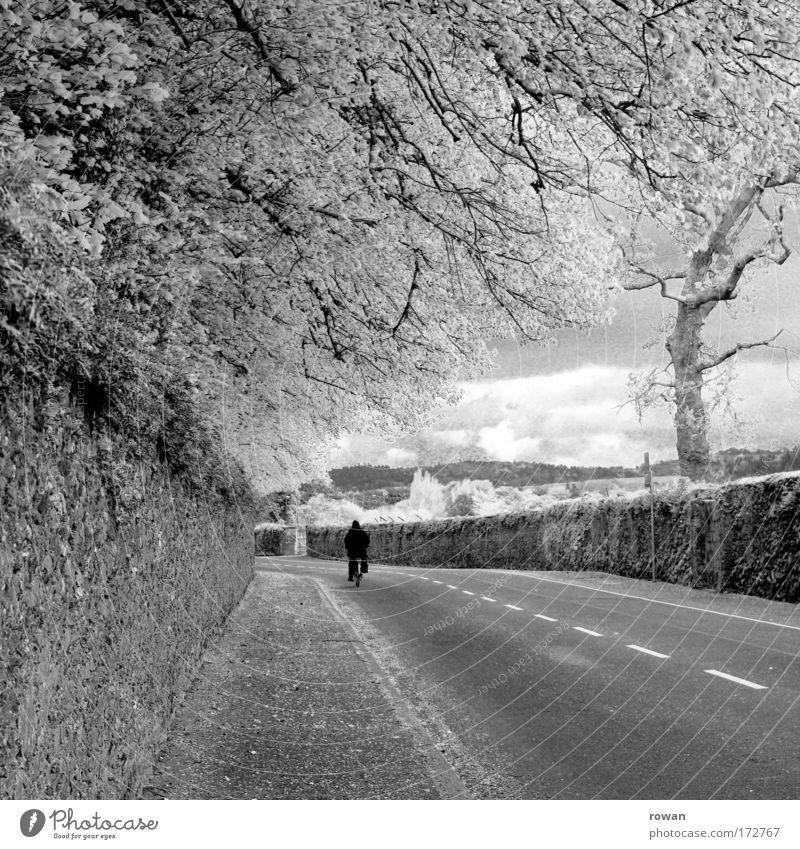 fahrradfahrer Mensch Natur Baum Straße Wege & Pfade Fahrrad Verkehr fahren Asphalt Bürgersteig Fahrradfahren Straßenverkehr Republik Irland Fahrradtour reisend