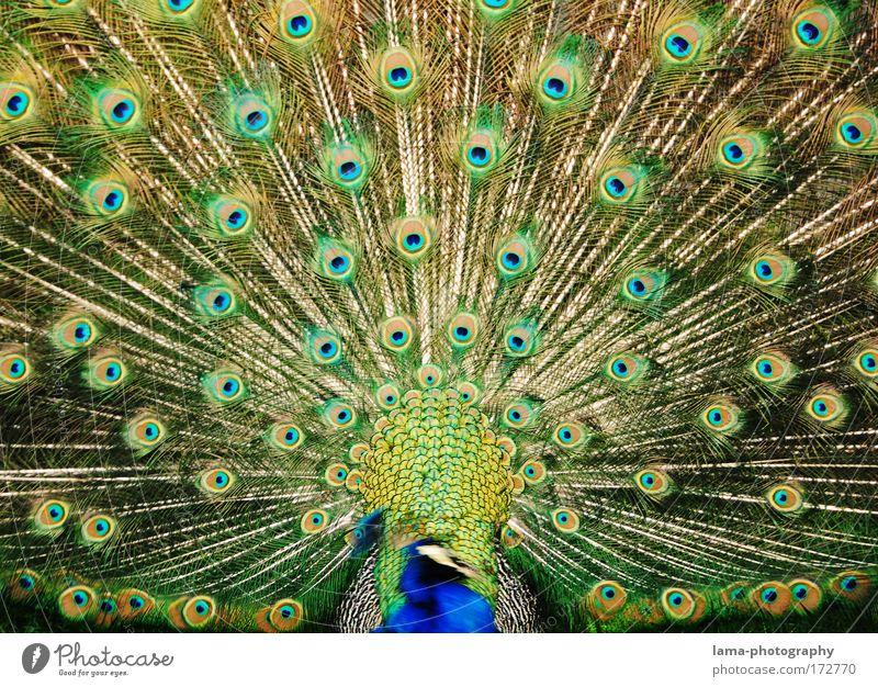 Schau mir in die Augen, Kleines! blau grün schön Tier Gefühle glänzend elegant Feder Kitsch Zoo Vogel Muster exotisch Präsentation Tierliebe