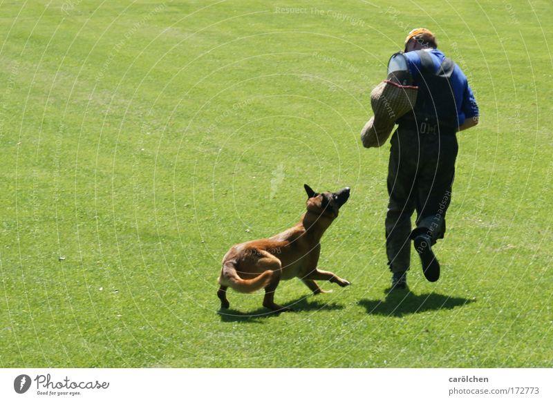 fang dich Mensch Mann grün Hund Tier Erwachsene Spielen Bewegung springen Zusammensein laufen maskulin bedrohlich beobachten fangen Konzentration