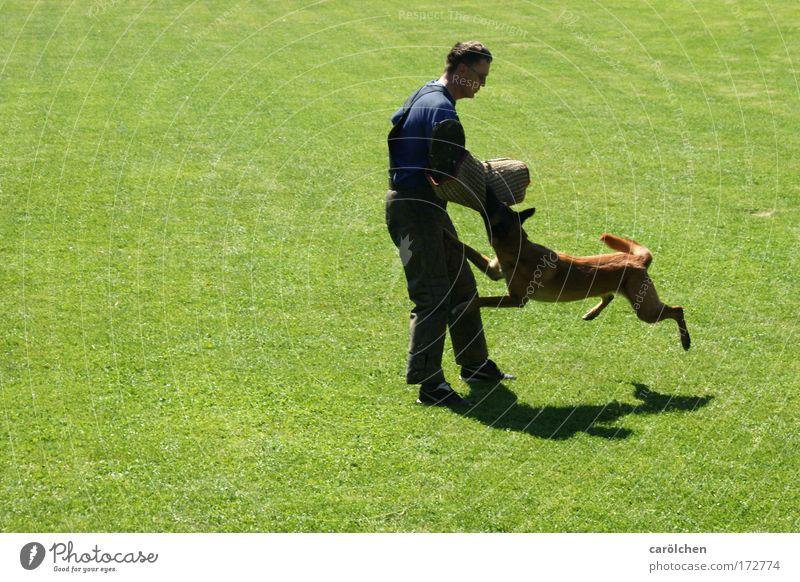 hab dich Farbfoto Außenaufnahme Fitness Sport-Training Mensch Mann Erwachsene 1 Tier Hund hängen Aggression muskulös Macht Angst gefährlich Hundesport