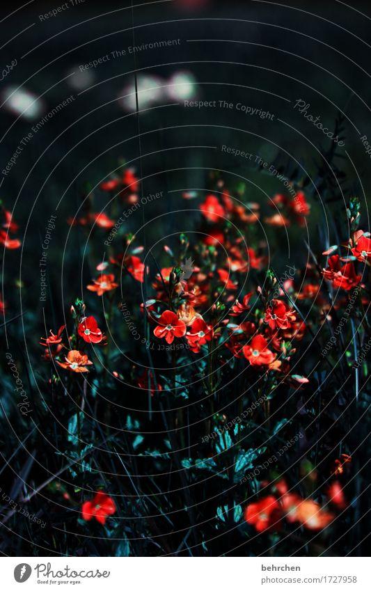 lichtblicke Natur Pflanze Sommer schön Blume Blatt dunkel Blüte Traurigkeit Wiese Gras klein Garten Park Feld Wachstum