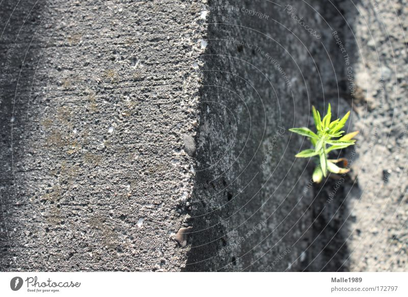 Wenn ich mal groß bin ... Farbfoto Außenaufnahme Menschenleer Tag Sonnenlicht Umwelt Natur Pflanze Sommer Schönes Wetter Sträucher Grünpflanze Wiese Bielefeld