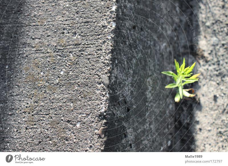 Wenn ich mal groß bin ... Natur grün schön Pflanze Sonne Sommer Einsamkeit Straße Wiese Umwelt Wand grau Glück Mauer Kraft frei