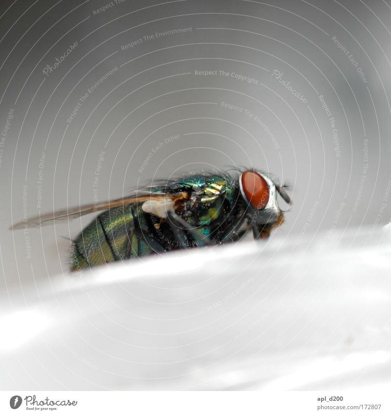 Profilfliege grün rot Einsamkeit Tier Zufriedenheit Fliege Umwelt Sicherheit ästhetisch Flügel Wildtier genießen