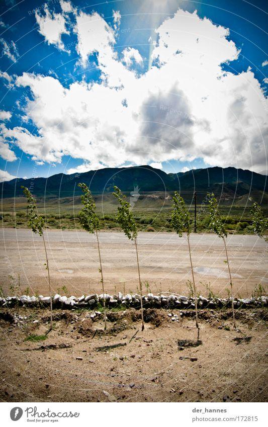 blowin' in the wind Himmel Natur blau grün Baum Pflanze Sonne Sommer Wolken Umwelt Landschaft Berge u. Gebirge Erde Wetter Wind Felsen