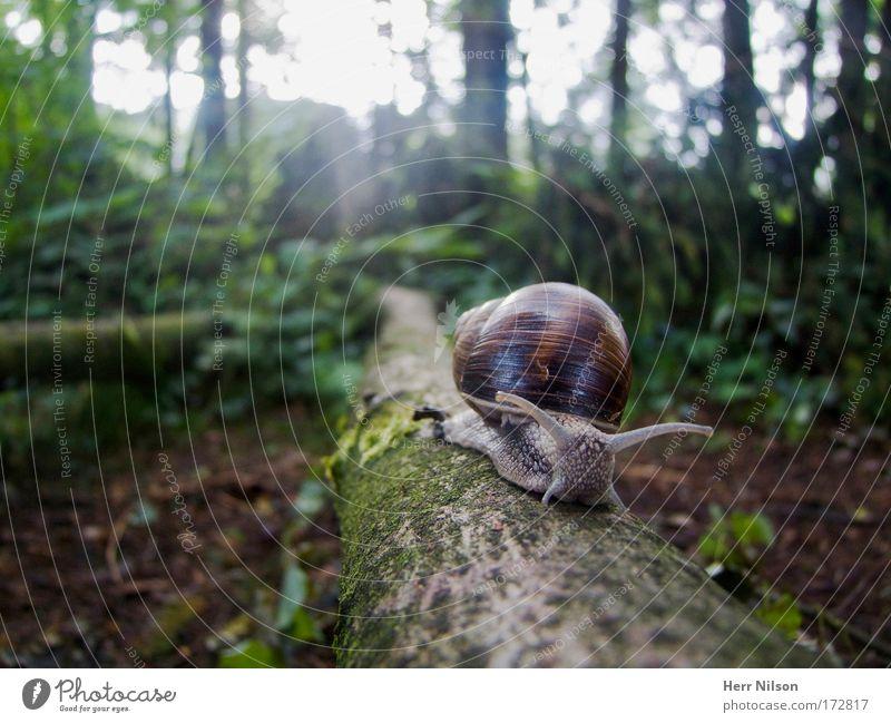 Wohnmobil Himmel Natur Baum Pflanze Blatt Tier Einsamkeit Wald Ferne Umwelt Bewegung Frühling klein Traurigkeit Luft Erde