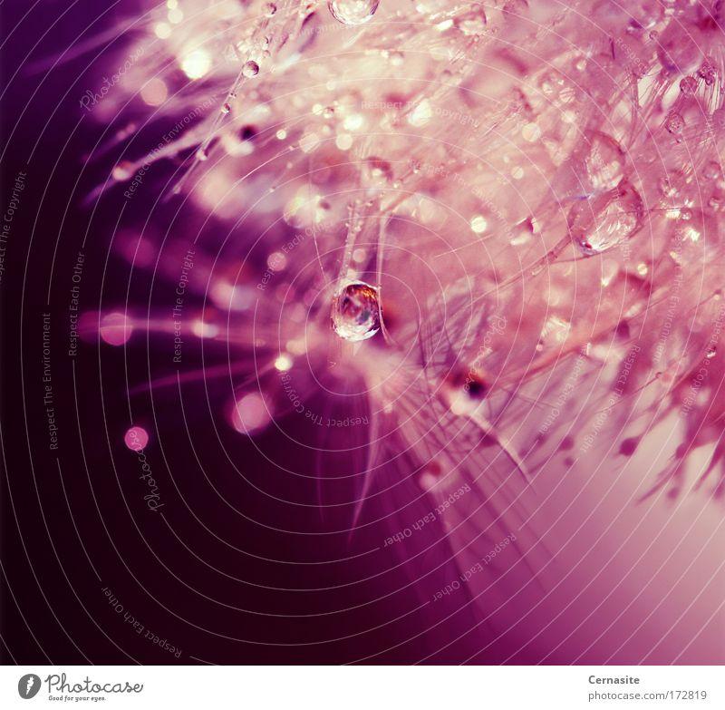 Natur schön weiß Pflanze Sommer Blume gelb Blüte träumen Regen hell glänzend rosa Wasser elegant Wassertropfen