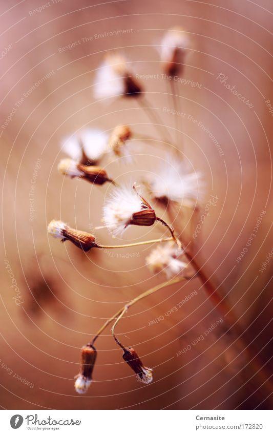 Natur schön weiß Blume Pflanze Sommer schwarz gelb dunkel Blüte Gras hell braun Küste Umwelt Erde