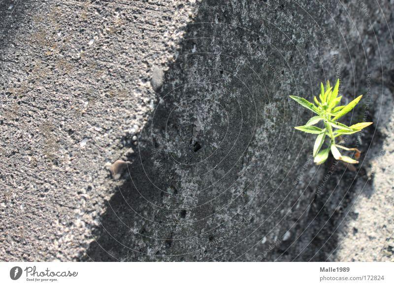 Ich wachs wo ich will ... Natur grün Pflanze Sommer Blatt Straße Leben Wiese Glück grau dreckig Umwelt Erde Brücke Wachstum Sträucher