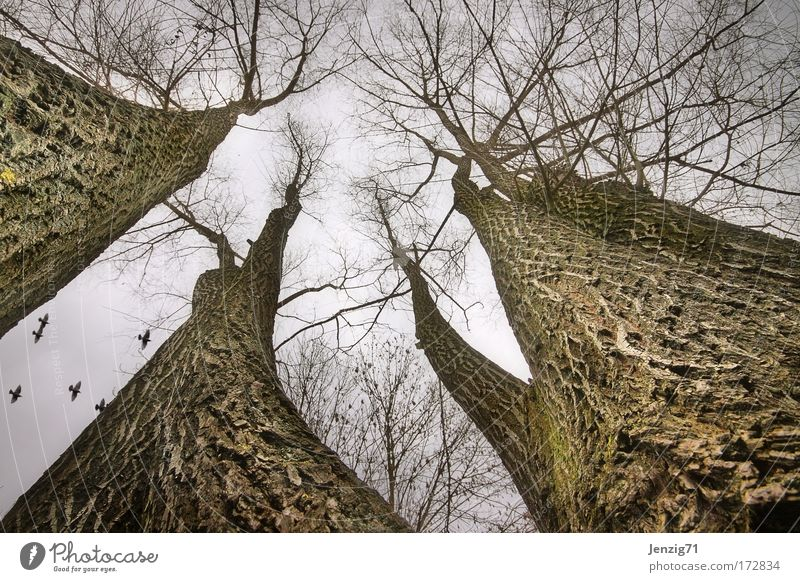 Hoch hinaus. Gedeckte Farben Außenaufnahme Weitwinkel Blick nach oben Umwelt Natur Landschaft Pflanze Himmel Herbst Wetter schlechtes Wetter Baum Park Wald