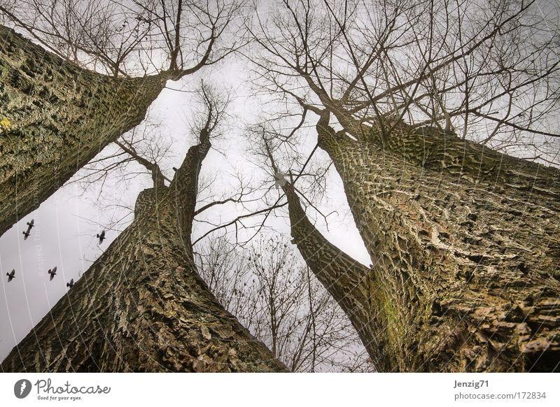 Hoch hinaus. Himmel Natur Baum Pflanze Wald Umwelt dunkel Landschaft Herbst Park Wetter schlechtes Wetter dehydrieren