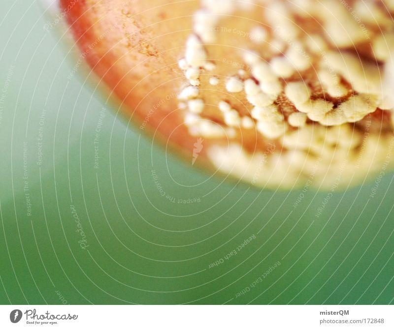 Kleinwelten. Natur Leben klein braun Wachstum verfaulen nah feucht Pilz Surrealismus Kirsche vergessen Biologie verdorben Miniatur Mikrofotografie