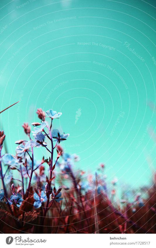 die vier jahreszeiten des sommers... Himmel Natur Pflanze Sommer schön Blume Blatt Wärme Blüte Wiese Gras klein Garten Park Feld Wachstum