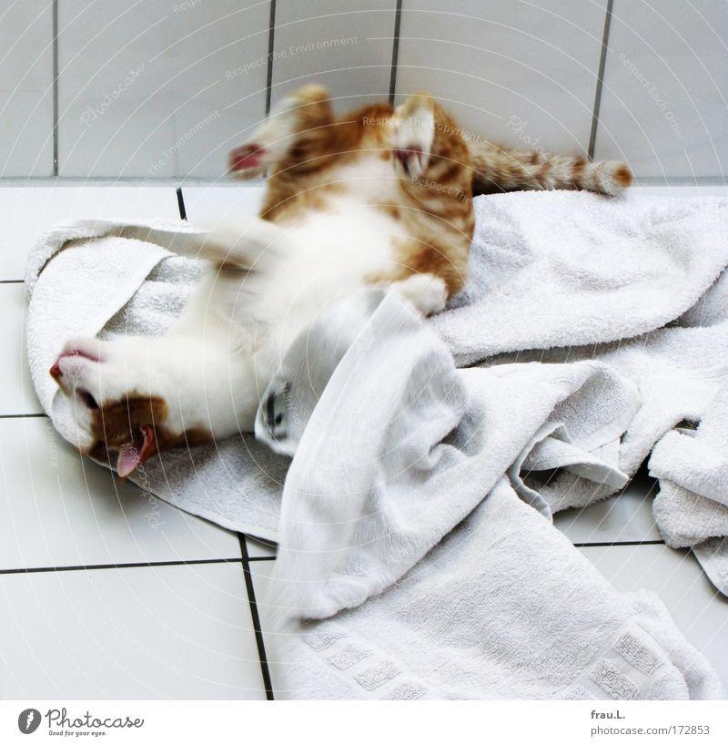 Wow! I feel good ... Gefühle Freude Tier Glück Katze Zufriedenheit Fröhlichkeit Bad Bewegungsunschärfe Lebensfreude 1 genießen gemütlich Haustier Handtuch