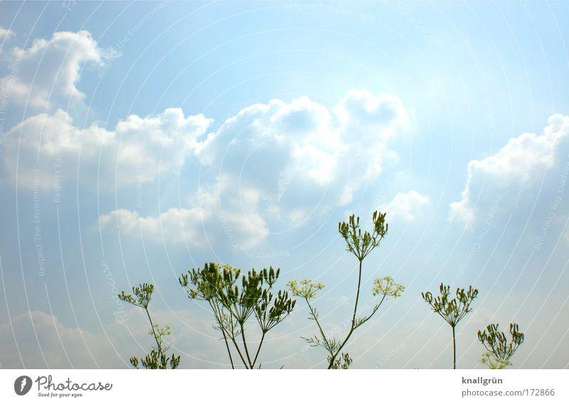 Zu meinen Füßen der Rhein... Natur Himmel weiß grün blau Pflanze Sommer Wolken hell Umwelt Blühend Flussufer Grünpflanze Kumulus gleißend