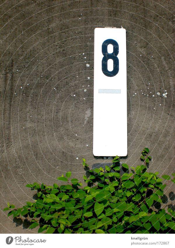 Markiert weiß grün Pflanze schwarz Wand grau Mauer Schilder & Markierungen Sicherheit Sträucher Ziffern & Zahlen Zeichen Hinweisschild 8 Rechteck Grünpflanze