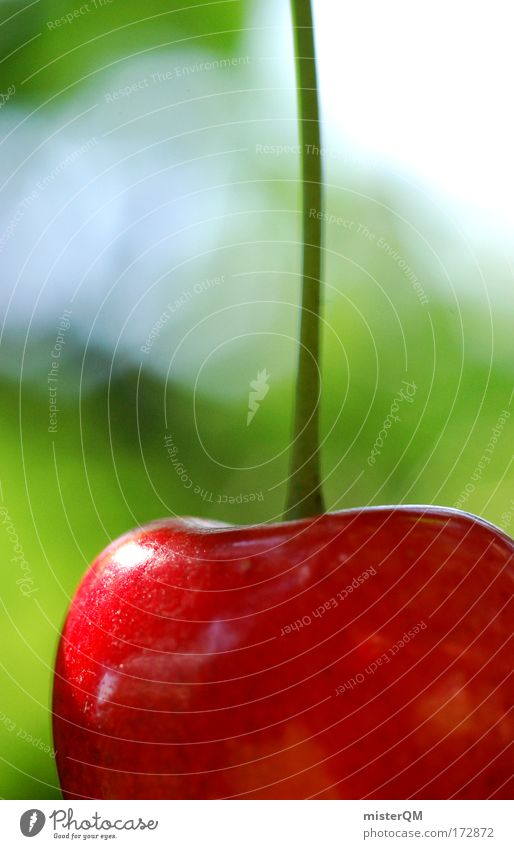 Zarte Versuchung. Natur rot Sommer Erholung Garten Gesundheit Frucht Lebensfreude entdecken lecker reif Ernte Sonnenbad Biologie Kirsche