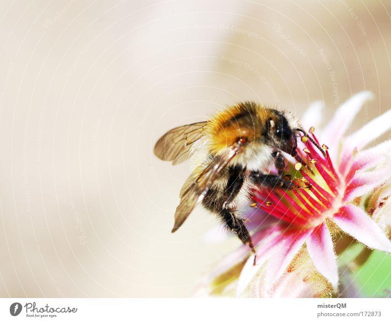 Ik Pop Dir Bishe Blühst. Blüte Suche Flügel Blühend Biene Vielfältig Honigbiene