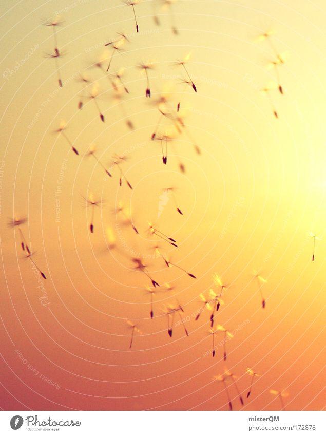 Zeitreise. Himmel Natur Ferien & Urlaub & Reisen Ferne Umwelt Leben Freiheit fliegen Horizont Wetter frei Luftverkehr Wind Erfolg Perspektive Beginn
