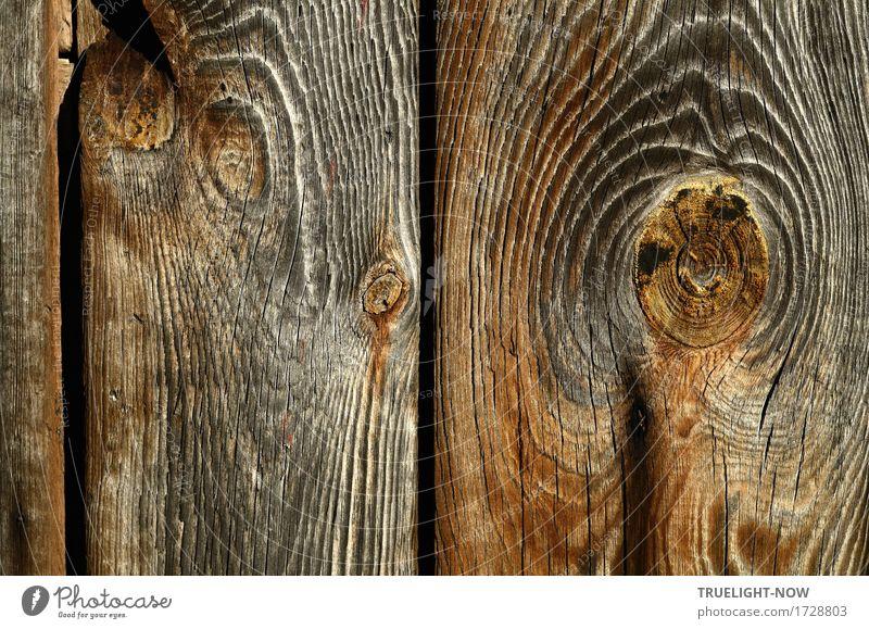 Happy Aging! Natur Urelemente Tür Tor Holztor Holzbrett Rost alt ästhetisch authentisch einfach historisch einzigartig natürlich Sauberkeit schön stark trocken