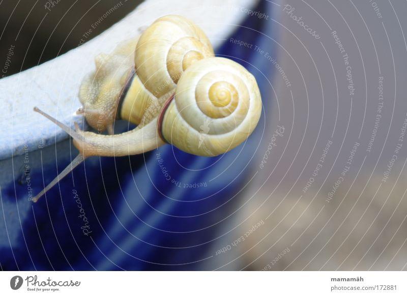 Schnecken-Jam Farbfoto Außenaufnahme Textfreiraum rechts Tag Klettern Bergsteigen Rennbahn Garten Tier 2 berühren Bewegung Eile überholen Haus Schneckenhaus