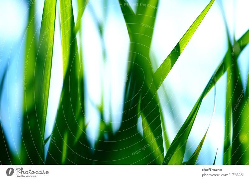 Untersicht! Natur grün Pflanze Sommer Blatt Wiese Gras Park frisch rein Nahaufnahme leuchten Makroaufnahme Halm Idee Schönes Wetter