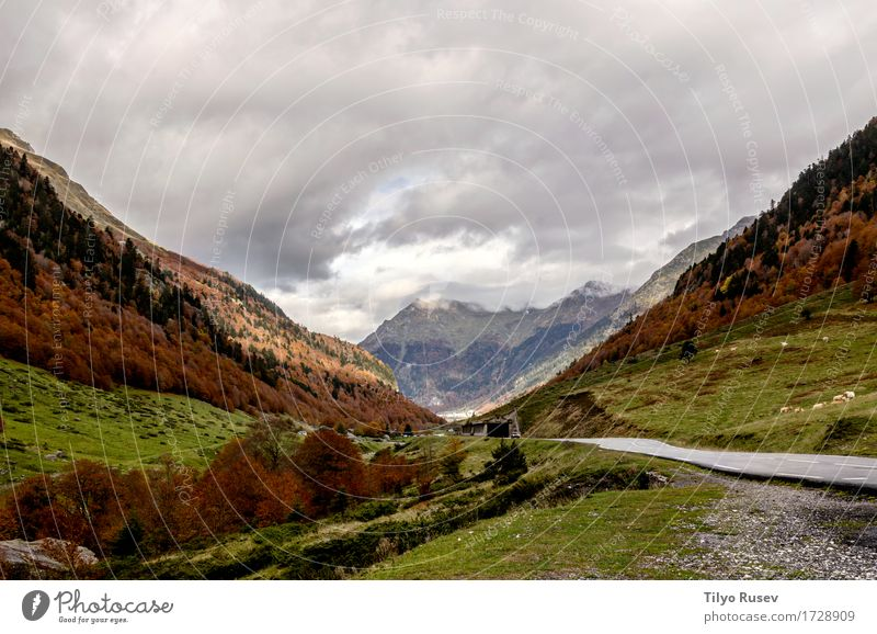 Pyrenees Atlantiques Natur Pflanze Farbe schön grün Sonne Baum Landschaft rot Blatt Wald Umwelt Straße gelb Wege & Pfade Herbst