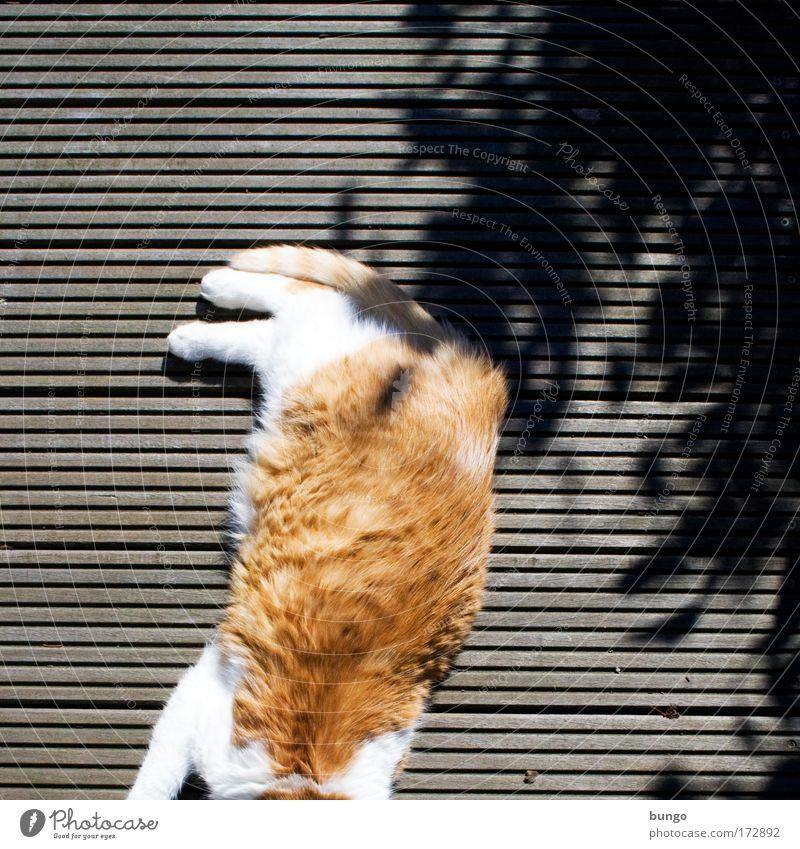 caput secare adhuc bene facit Farbfoto Außenaufnahme Textfreiraum rechts Textfreiraum oben Tag Schatten Sonnenlicht Vogelperspektive Tier Haustier Katze 1