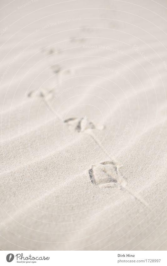 Spuren im Sand Leben Sinnesorgane Ferien & Urlaub & Reisen Tourismus Ausflug Sommer Sommerurlaub Sonne Strand Meer Insel Umwelt Natur Landschaft Küste Nordsee