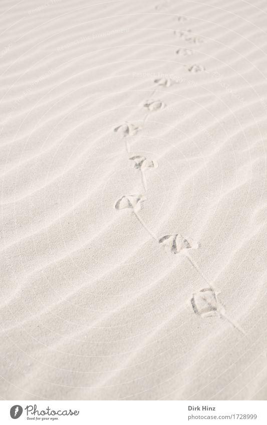 Spuren im Sand Wellness Wohlgefühl Ferien & Urlaub & Reisen Tourismus Ausflug Freiheit Sommer Sommerurlaub Sonne Strand Insel Umwelt Natur Landschaft Küste