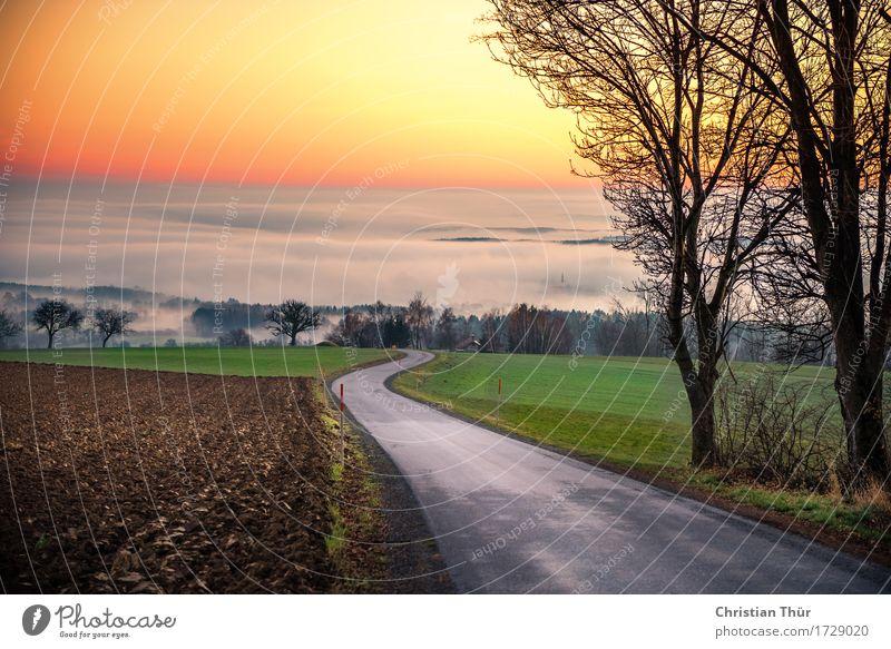 Abendnebel Himmel Natur Ferien & Urlaub & Reisen Pflanze Baum Landschaft Erholung Tier ruhig Ferne Winter Berge u. Gebirge Umwelt Leben Herbst Wiese