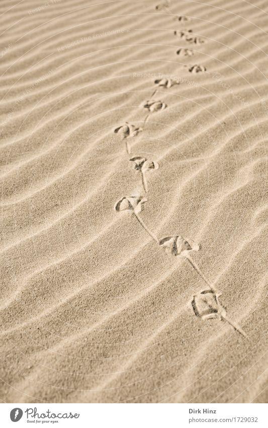 Wegweiser Natur Ferien & Urlaub & Reisen Sommer Sonne Landschaft Tier Ferne Strand Umwelt Wege & Pfade Freiheit Sand braun gehen Tourismus gold