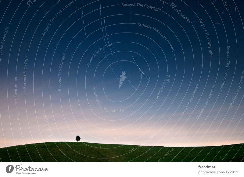 sommernachtstraum Natur Himmel Baum blau Sommer Einsamkeit dunkel Wiese Bewegung träumen Landschaft Stern klein Umwelt Horizont ästhetisch