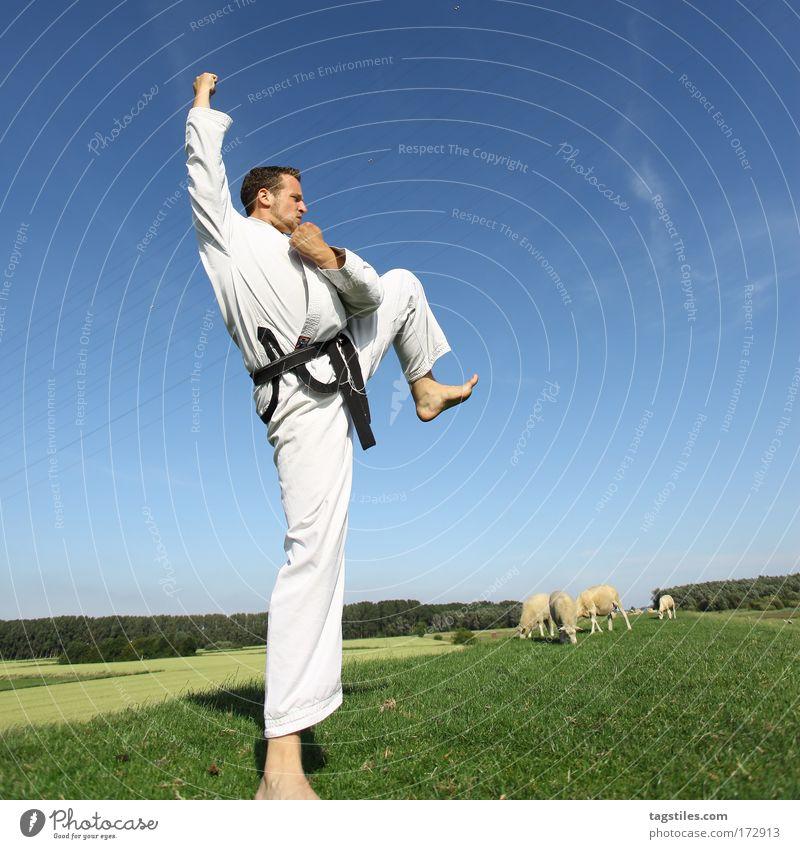 ONE STEP BEYOND Kämpfer Kampfsport Taekwondo Karate Fighter kämpfen Deich Schaf schwarz Gürtel Kraft stark Kontrolle Fußtritt treten Farbfoto Fluchtpunkt