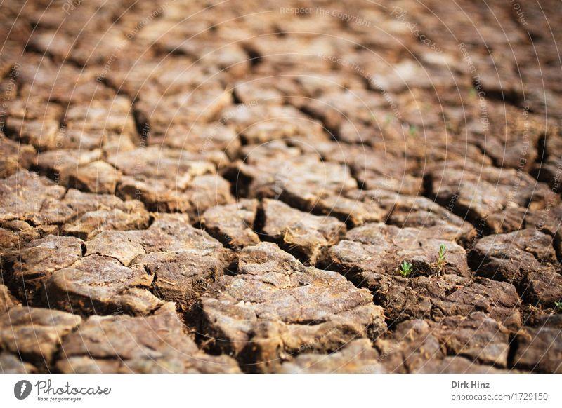 Dürre / drought Natur Pflanze grün Landschaft Blatt Umwelt braun Wachstum Erde Klima Wandel & Veränderung Hoffnung trocken Wüste Umweltschutz Klimawandel