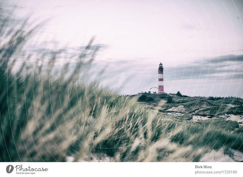 Leuchtturm Wittdün / Amrum Ferien & Urlaub & Reisen Sommer Meer Ferne Strand Umwelt Gras Freiheit Tourismus Horizont Ausflug Kommunizieren Insel Zeichen