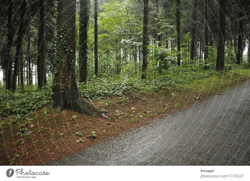 Waldweg Umwelt Natur Landschaft Pflanze Wasser Sonnenlicht Frühling Sommer Klima Wetter schlechtes Wetter Regen außergewöhnlich dunkel dünn elegant frisch