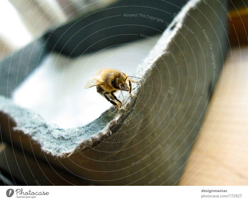 Pool Biene weiß Tier Fenster grau klein fliegen Papier Ecke Schwimmbad Insekt Biene Kasten niedlich Flugzeuglandung Fressen