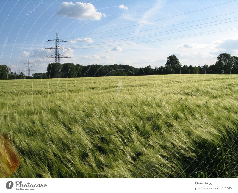 Der Wind das himmlische Kind Feld Strommast Sonne goldes Feld Baluer Himmel