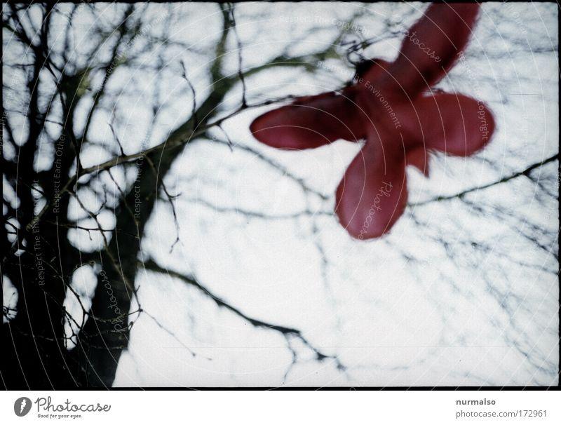 Roter Schmetterling in Tristess Natur Baum Winter kalt Park Stimmung Erde Kunst Umwelt fliegen Horizont Fröhlichkeit ästhetisch einfach Kitsch fallen