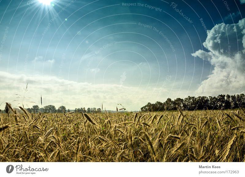 über land Leben Ausflug Sommer Natur Landschaft Himmel Wolken Sonnenlicht Wetter Getreide Gerste Gerstenfeld Feld ästhetisch bedrohlich schön wild blau braun